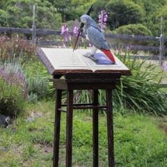 Flaubert's Parrot ©Pamela Blotner